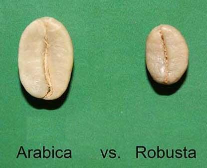 مقایسه دان عربیکا با دان ربوستا