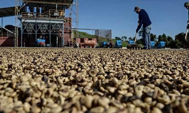 خشک کردن دانه های قهوه