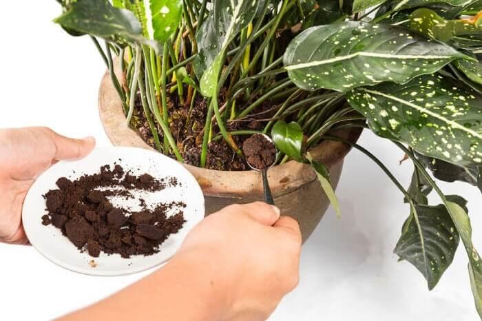 تفاله قهوه نوعی کود طبیعی