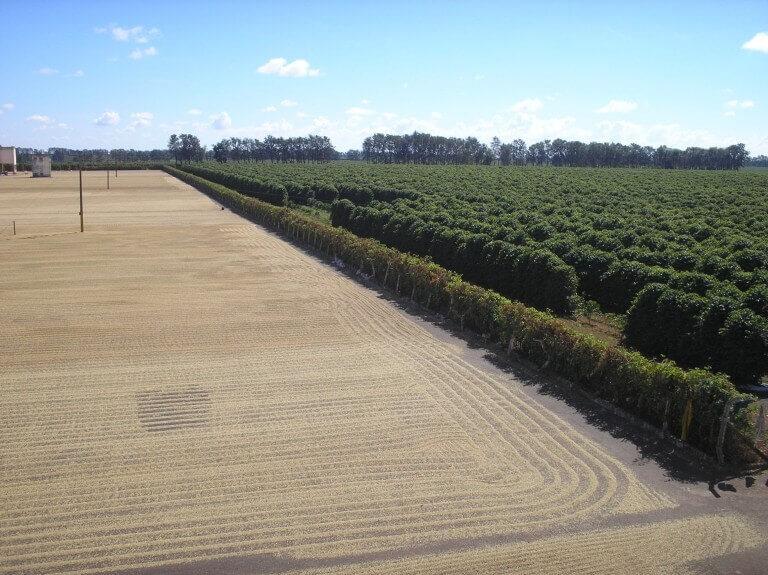 مزرعه قهوه برزیل