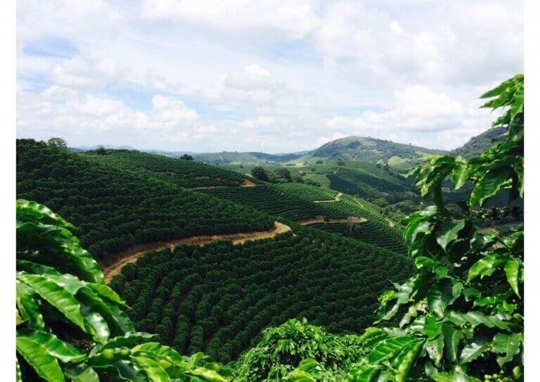 قهوه در یکی از شهرهای برزیل