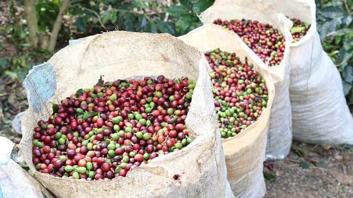 میوه یا گیلاس قهوه
