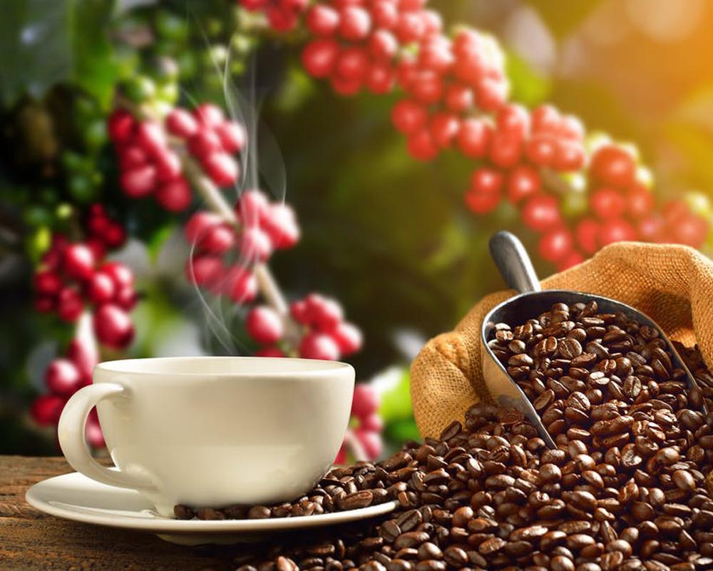 طعم دانه قهوه در ارتفاعات مختلف