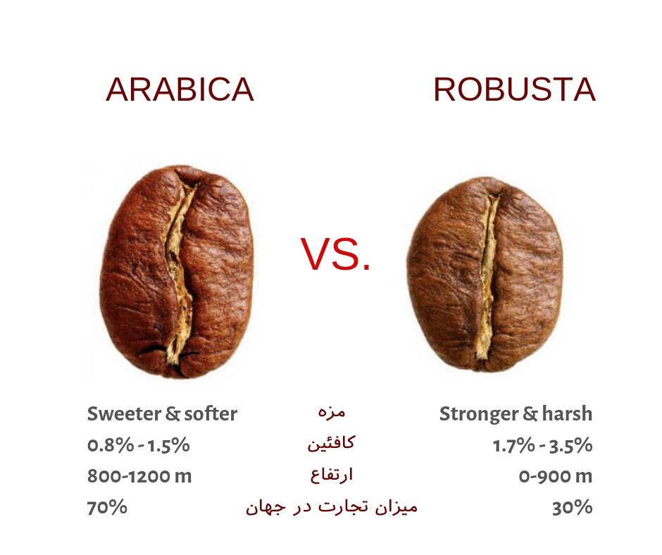 تفاوت دانه قهوه عربیکا و روبوستا که در ارتفاعات مختلف کشت می شوند