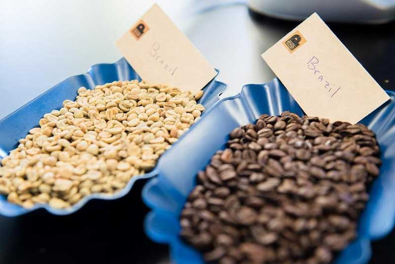 Green-and-roasted-Brazilian-coffees
