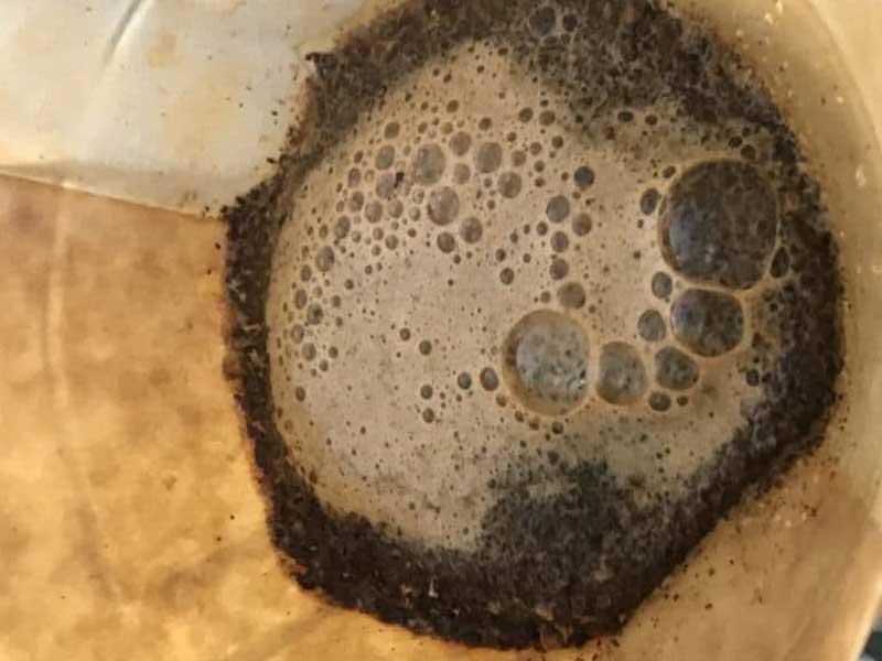 شکفت قهوه Coffee blooming